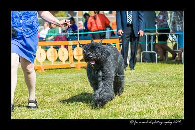 DSC_0051-12x18-07_2015-Dog_Show-W