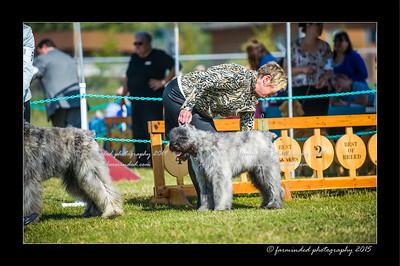 DSC_0080-12x18-07_2015-Dog_Show-W