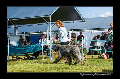 DSC_0097-12x18-07_2015-Dog_Show-W