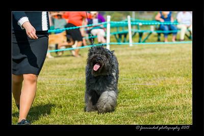 DSC_0040-12x18-07_2015-Dog_Show-W