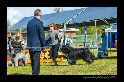 DSC_0089-12x18-07_2015-Dog_Show-W