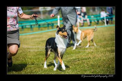 DSC_0150-12x18-07_2015-Dog_Show-W