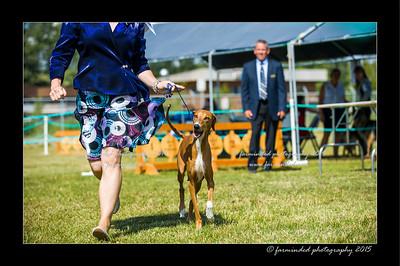 DSC_0769-12x18-07_2015-Dog_Show-W
