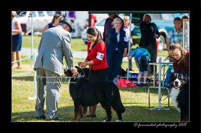 DSC_0539-12x18-07_2015-Dog_Show-W