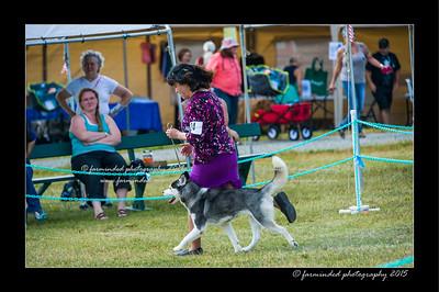 DSC_0854-12x18-07_2015-Dog_Show-W