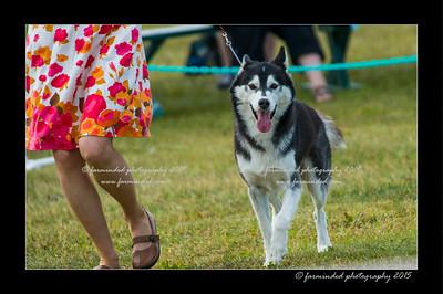 DSC_0866-12x18-07_2015-Dog_Show-W