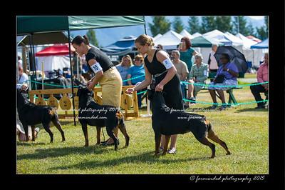 DSC_0163-12x18-07_2015-Dog_Show-W