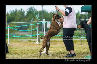 DSC_1016-12x18-07_2015-Dog_Show-W