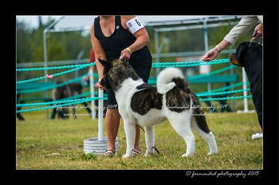 DSC_1009-12x18-07_2015-Dog_Show-W