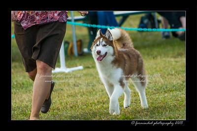 DSC_0876-12x18-07_2015-Dog_Show-W