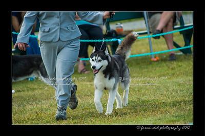 DSC_0870-12x18-07_2015-Dog_Show-W