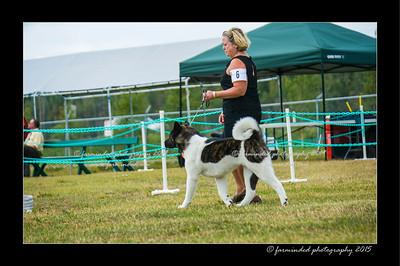 DSC_1000-12x18-07_2015-Dog_Show-W