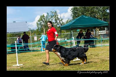 DSC_0546-12x18-07_2015-Dog_Show-W