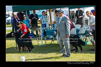 DSC_0535-12x18-07_2015-Dog_Show-W