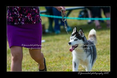 DSC_0850-12x18-07_2015-Dog_Show-W