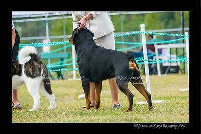 DSC_1013-12x18-07_2015-Dog_Show-W