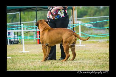 DSC_1014-12x18-07_2015-Dog_Show-W