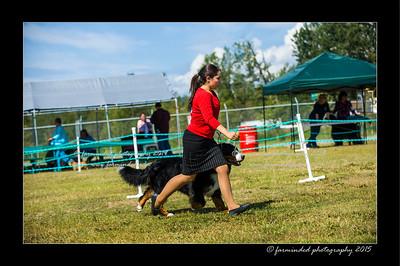 DSC_0550-12x18-07_2015-Dog_Show-W