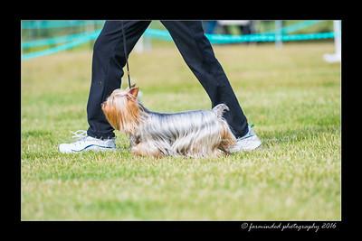 DS5_0087-12x18-06_2016-Dog_Show-W