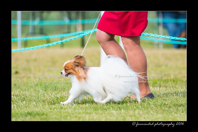 DS5_0009-12x18-06_2016-Dog_Show-W