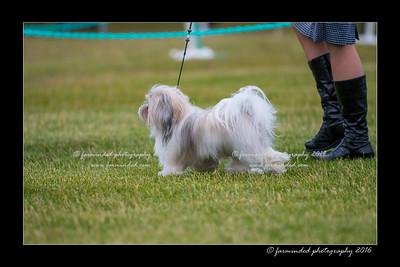DS5_1003-12x18-06_2016-Dog_Show-W