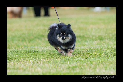 DS5_0202-12x18-06_2016-Dog_Show-W