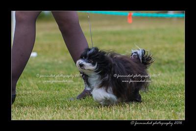DS5_0996-12x18-06_2016-Dog_Show-W