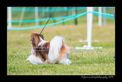DS5_0015-12x18-06_2016-Dog_Show-W