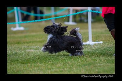 DS5_0958-12x18-06_2016-Dog_Show-W