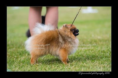 DS5_0188-12x18-06_2016-Dog_Show-W