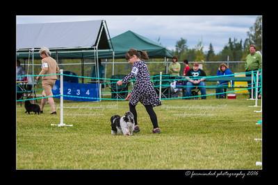 DS5_1049-12x18-06_2016-Dog_Show-W