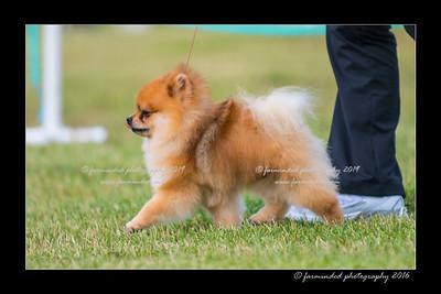 DS5_0178-12x18-06_2016-Dog_Show-W