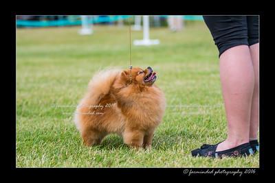 DS5_0248-12x18-06_2016-Dog_Show-W