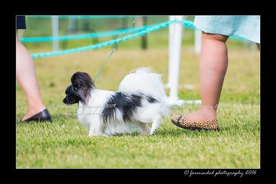 DS5_0020-12x18-06_2016-Dog_Show-W