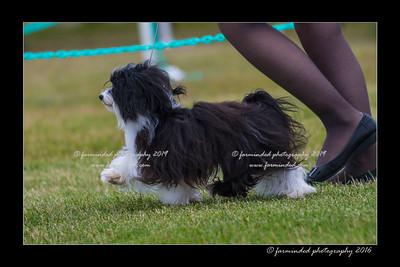 DS5_0983-12x18-06_2016-Dog_Show-W