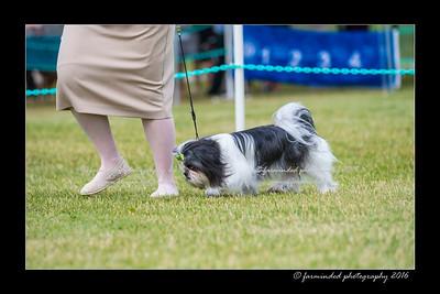 DS5_0269-12x18-06_2016-Dog_Show-W