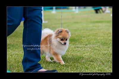 DS5_0223-12x18-06_2016-Dog_Show-W