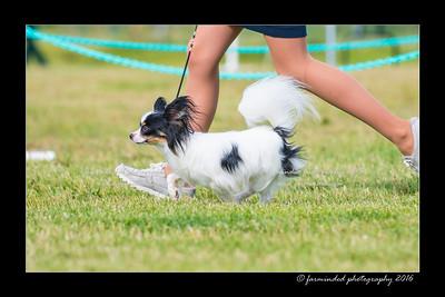 DS5_0011-12x18-06_2016-Dog_Show-W