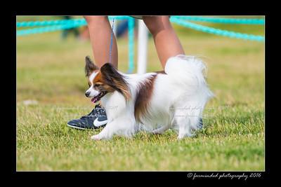 DS5_0003-12x18-06_2016-Dog_Show-W