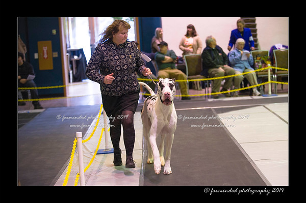 138th Tanana Valley Kennel Club All Breed Dog Show