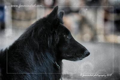 2018 - Alaska Kennel Club - All Breed Show