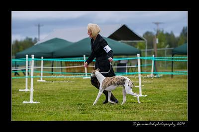 DSC_0040-12x18-07_2014-Dog_Show-W