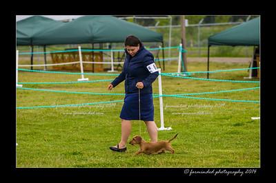 DSC_0023-12x18-07_2014-Dog_Show-W