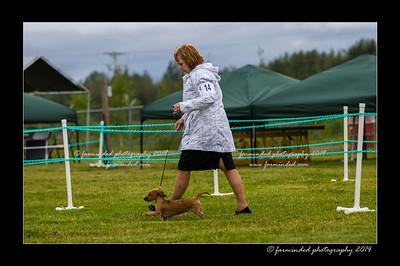 DSC_0025-12x18-07_2014-Dog_Show-W