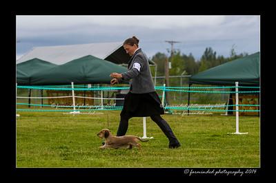 DSC_0033-12x18-07_2014-Dog_Show-W
