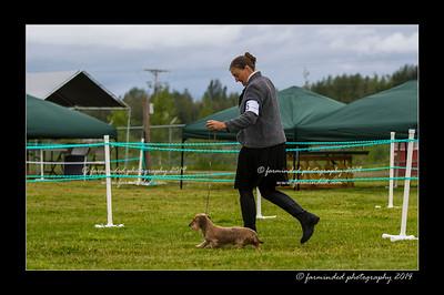 DSC_0031-12x18-07_2014-Dog_Show-W
