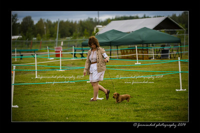 DSC_0013-12x18-07_2014-Dog_Show-W