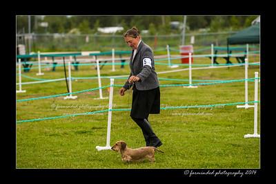 DSC_0021-12x18-07_2014-Dog_Show-W