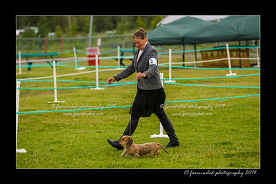 DSC_0019-12x18-07_2014-Dog_Show-W