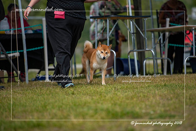 D75_4781-12x18-Dog_Show-W